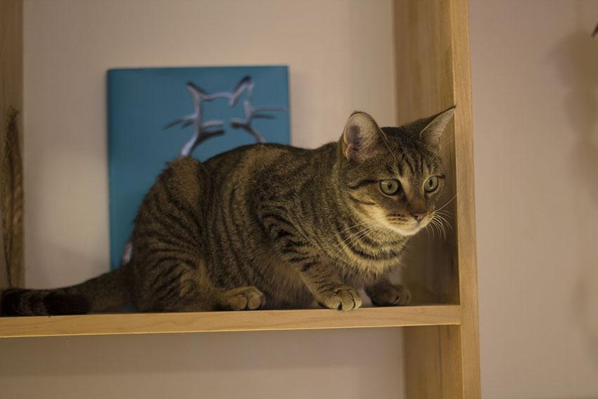 cat-cafe1