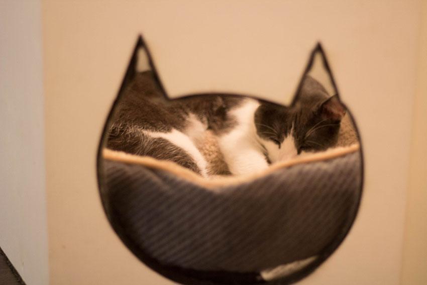 cat-cafe-10