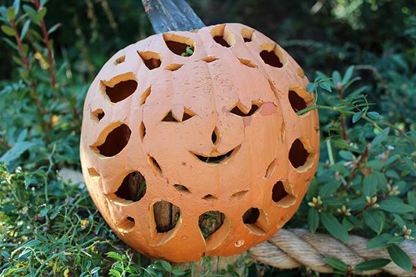 Sun-Shaped Carved Pumpkin - NY Botanical Gardens