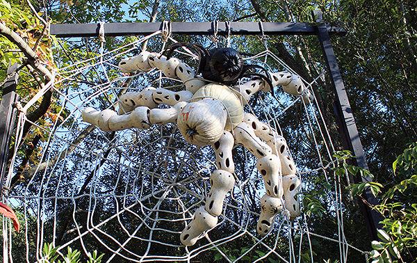 Spider made from Pumpkins