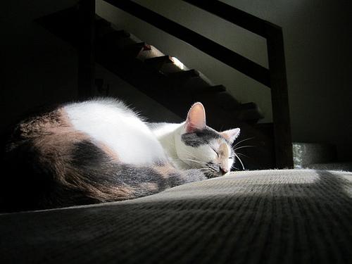 my cat riley