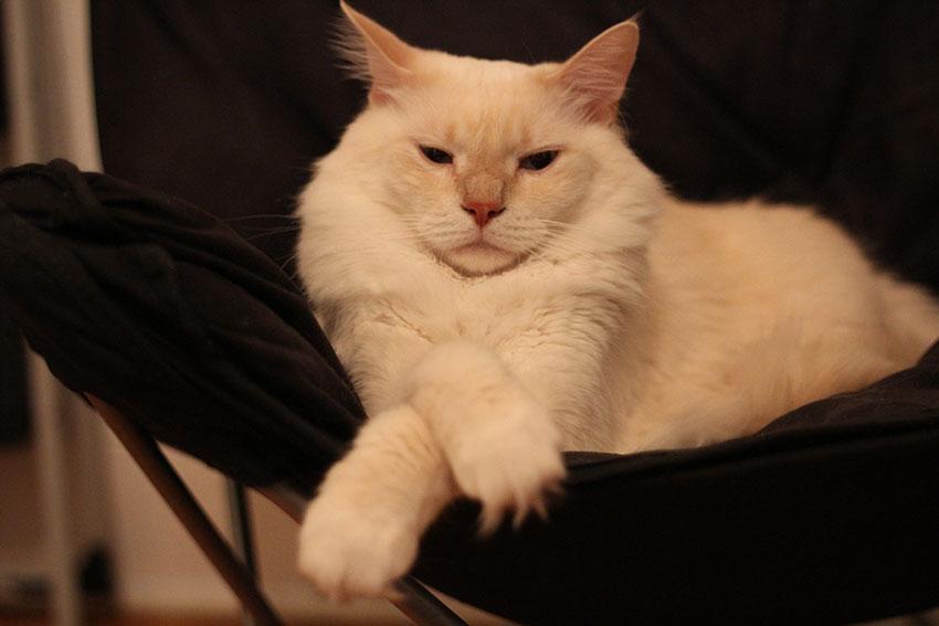 Watson-in-Chair